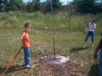 Watering is extremely important once the tree is planted